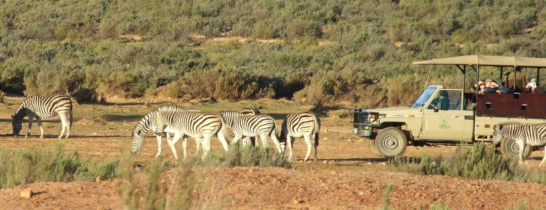 Safari Tours Cape Town