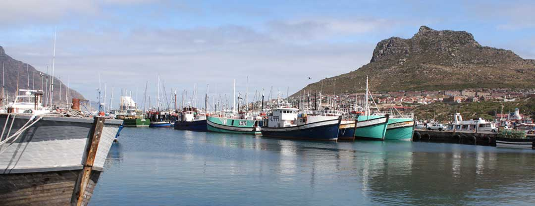 Hout Bay Tour