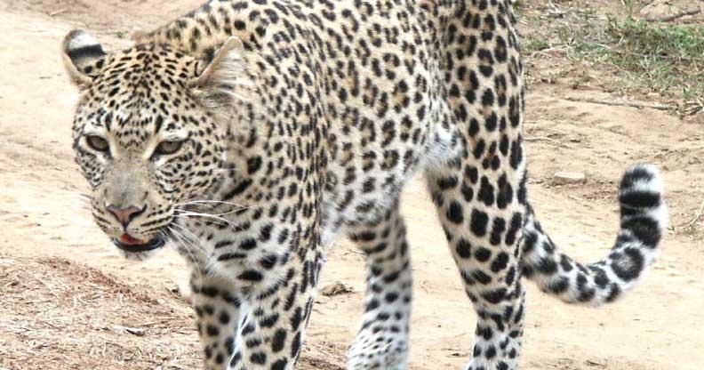 Private Full Day Safari Tour